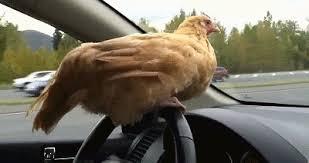 chickcar.jpg
