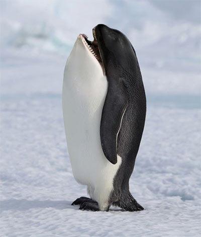 Killer_Penguin.jpg