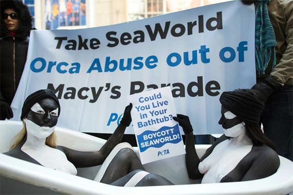 Orca_Protest.jpg