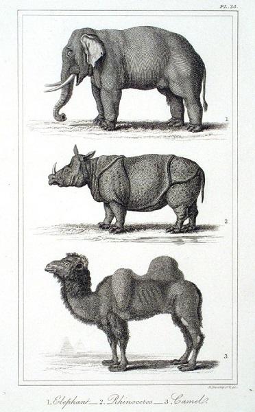Eleph_Rhino_Camel.(h=600).jpg