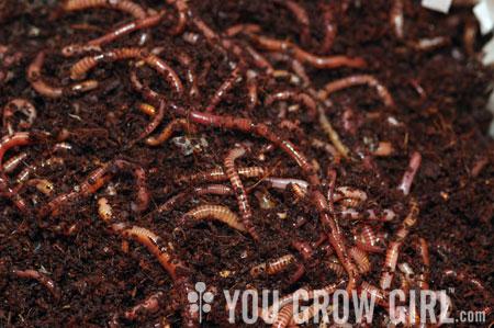 worms-you-grow-girl.jpg