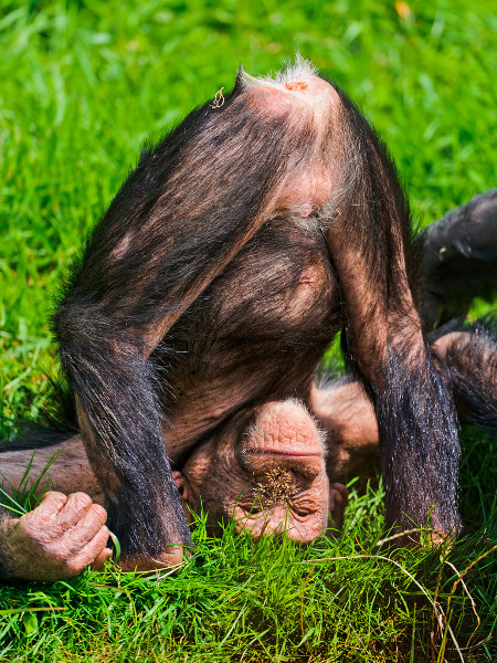 cheeky-monkey.jpg