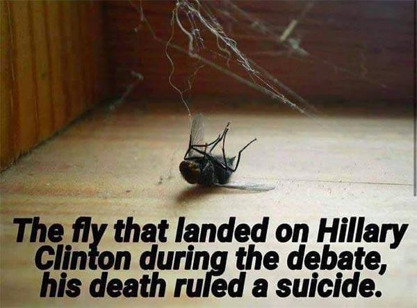 Fly_Hillary_Face_Dead.jpg
