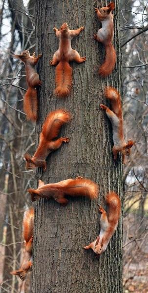 squirrel_Family_Meeting.jpg