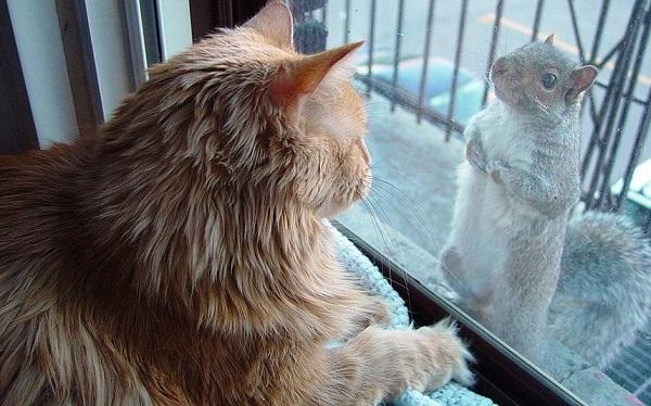squirrel_fat_cat.jpg