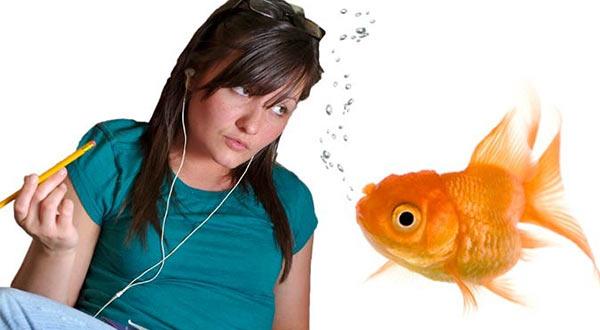 Goldfish_Attention_Span.jpg