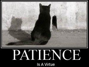 patience-is-a-virtue.jpg