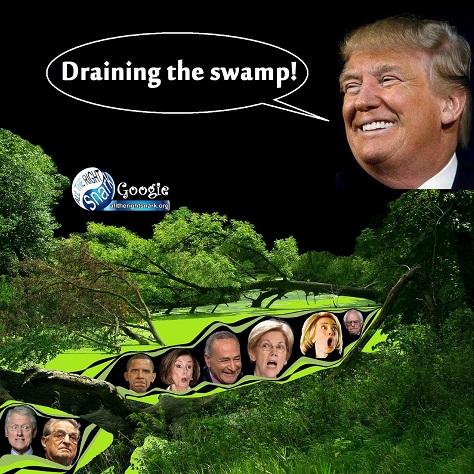 swamp - 37.jpg