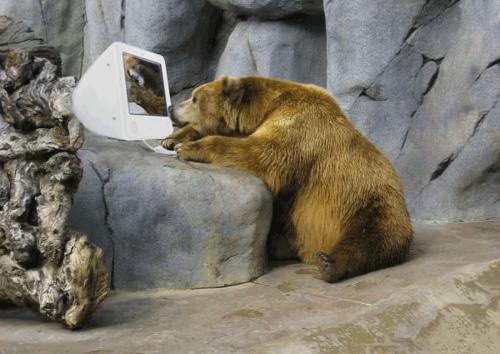 bear-sitting-at-the-computer.jpg
