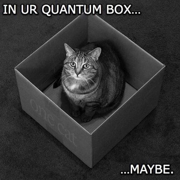 Schrodinger_Cat_Maybe.jpg