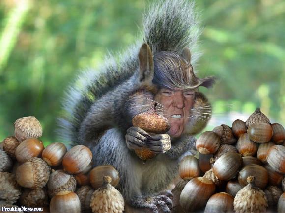 Donald-Trump-the-Squirrel.jpg