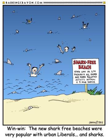 shark beach2.jpg