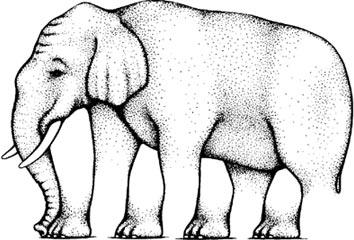 Elephant_Optical_Illusion.jpg