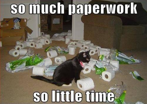 Cat_Paperwork.jpg