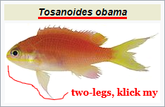 Tosanoides_obama.png