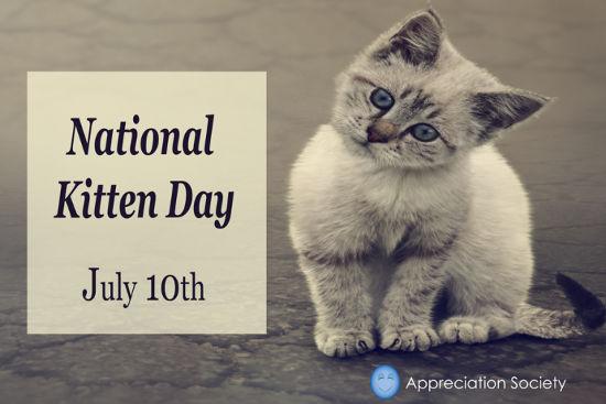 Kitten Appreciation.jpg
