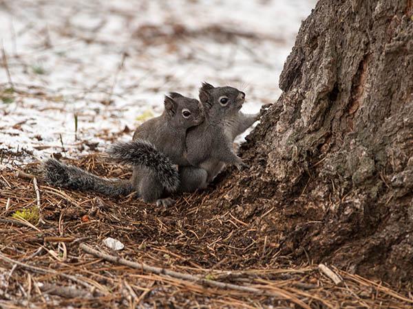 0123-Squirrels.jpg