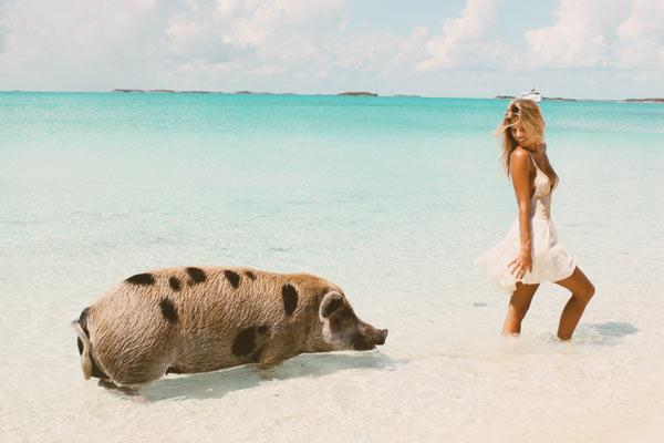 Pigs_Bahamas.jpg
