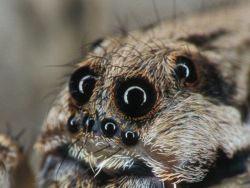 spider_8_eyes.jpg