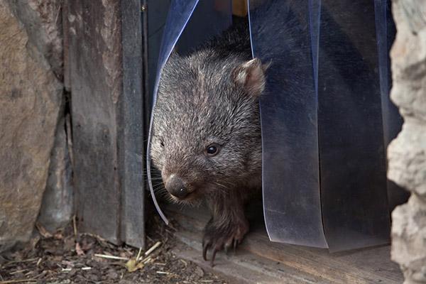wombat-poop-2.jpg