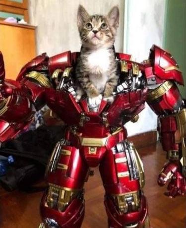anti-cat.jpg