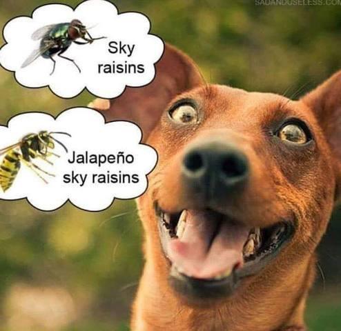 Dog_Sky_Raisins.jpg
