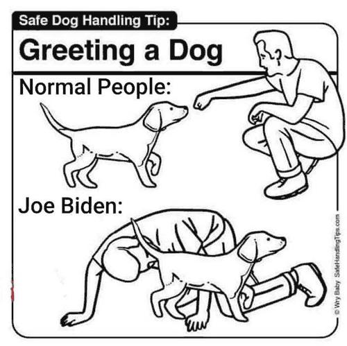 Biden_Dog.png
