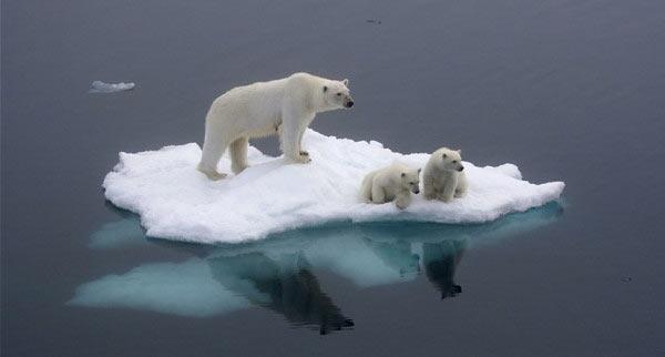 Polar_Bears_Stranded.jpg
