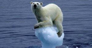 stranded-polar-bear-300x158.jpg