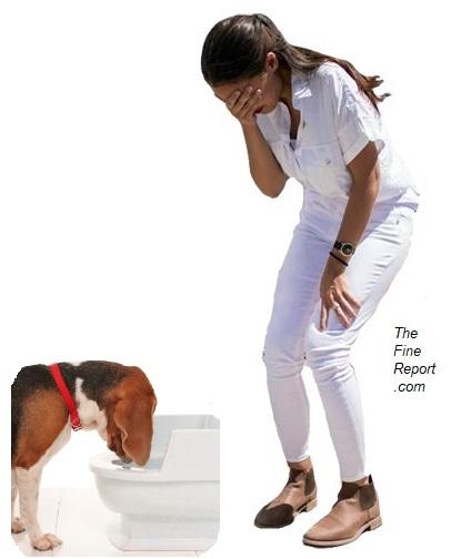 Dog toilet.jpg