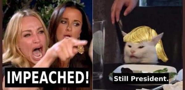 Trump_Cat_Meme.jpg
