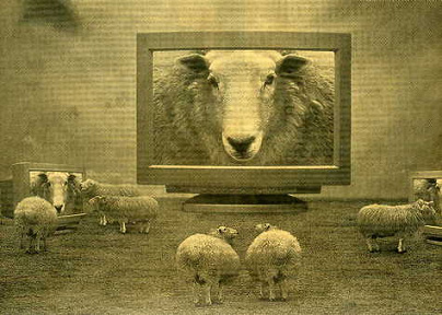 sheep on TV.jpg
