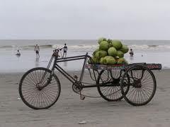 coconuts 2.jpg