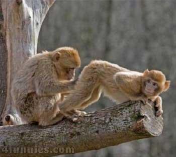 Monkey_Scan.jpg