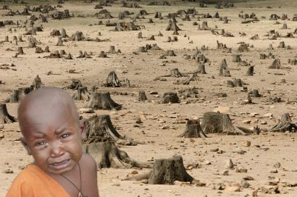 Deforestation copy.jpg