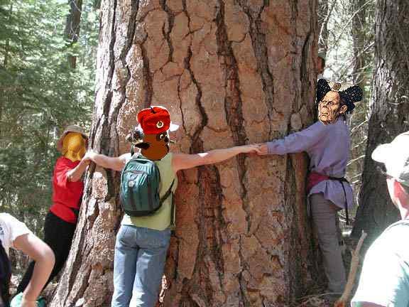 love tree1.jpg