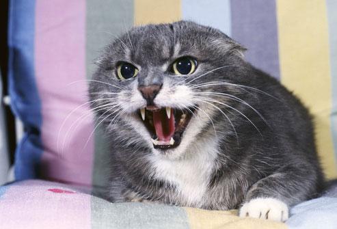 cat-backed-into-corner.jpg