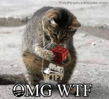 omg-wtf-kitty.jpg