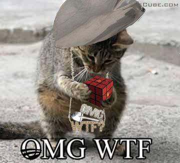 omg-wtf-kitty1.jpg