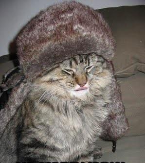 cat w hat sm.jpg