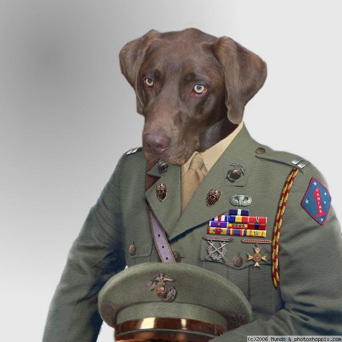 war_dog1.jpg