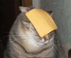cat cheese.jpg