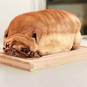Loafdog1200x200.jpg