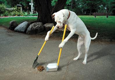 dog-poop.jpg