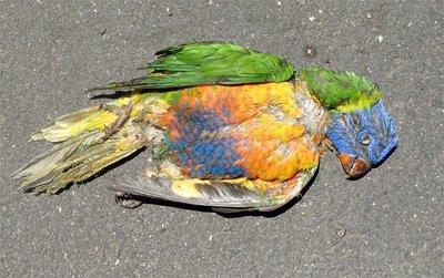 dead-parrot.jpg