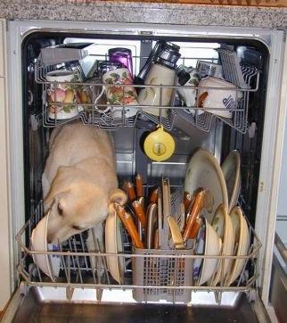 dishwasher4lu.jpg