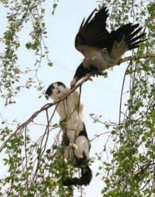 when_birds_attack_14.jpg