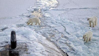 Polar_Bears_Submarine.jpg