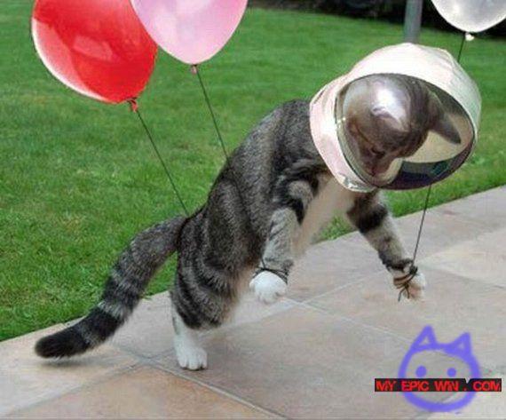 Cat-in-space.jpg