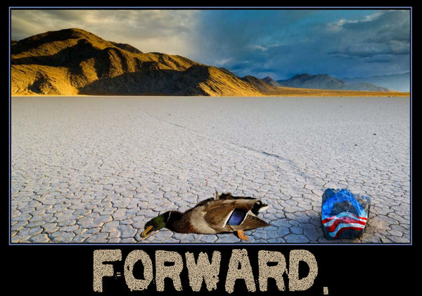 forward duck.jpg